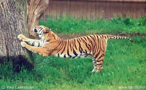 【征集】动物伸懒腰的图片